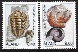 1996 Fossils