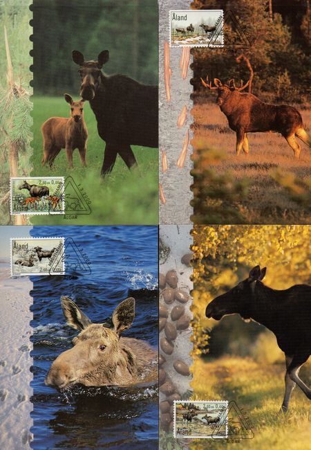 2000 The Elk PHQ Card Set