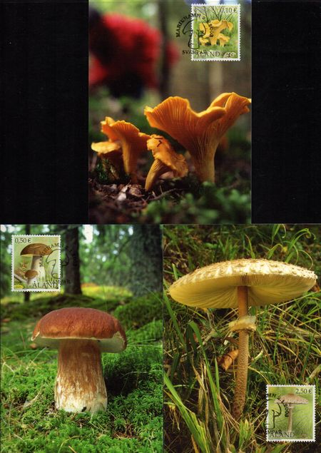 2003 Edible Mushrooms PHQ Card Set