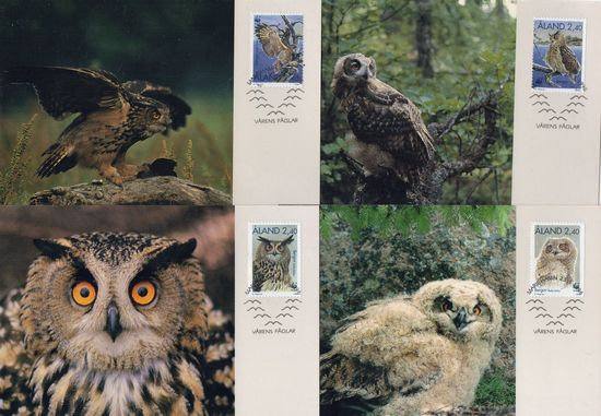1996 The Eagle Owl PHQ Card Set