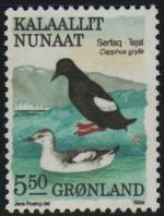 5.50 Kr Black Guillemots