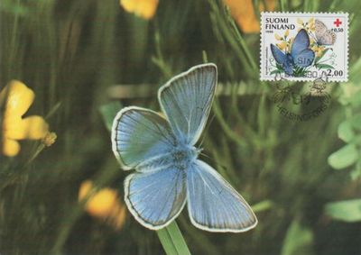 1990 Red Cross Butterfly Maxi Card